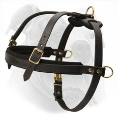 American Bulldog harness for training to pull