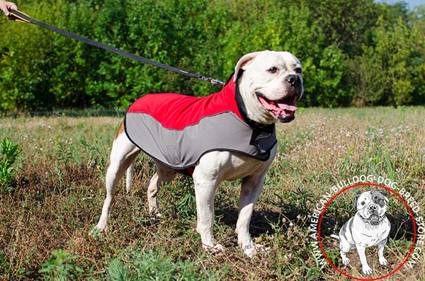 American Bulldog nylon harness with durable stitching for professional use