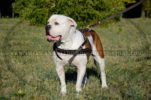 working dog harness
