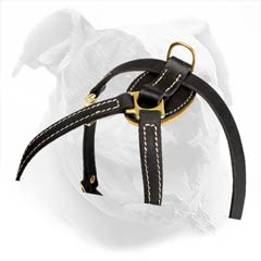 Absolutely non-toxic harness for Bully