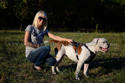 American Bulldog Leather Harness for Better Control