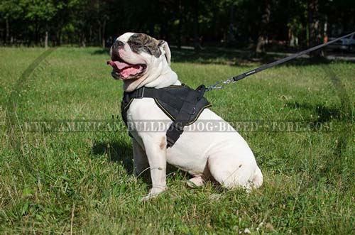 Nylon American Bulldog Harness with Wide Chest Plate