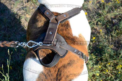 Nickel Ring for Comfortable Leash Attachment