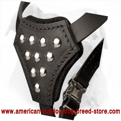 Leather American Bulldog Puppy Harness