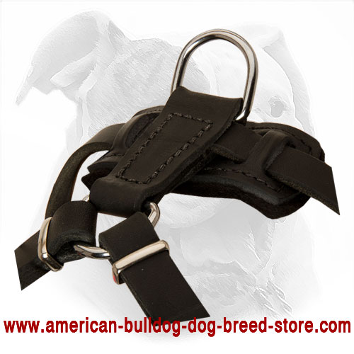 Leather Dog Harness with Adjustable Straps American Bulldog Puppy