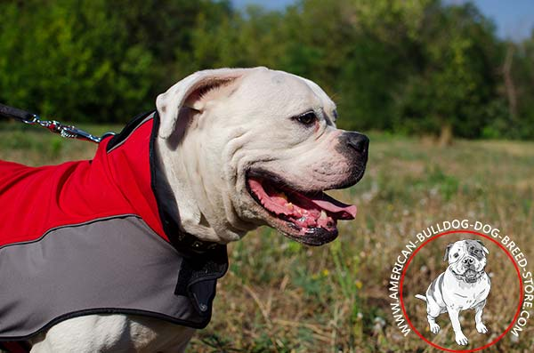 American Bulldog Winter Coat with Protective Stand-up Collar