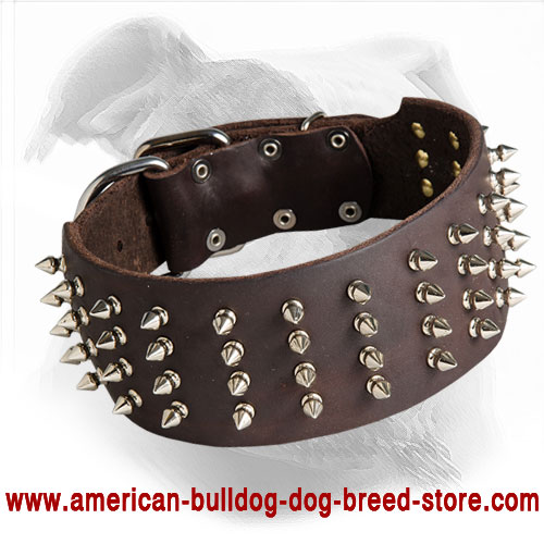 3 Inch Wide Leather Dog Collar for American Bulldog