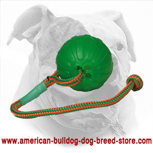 American Bulldog Chewing Ball Equipped with Nylon Rope