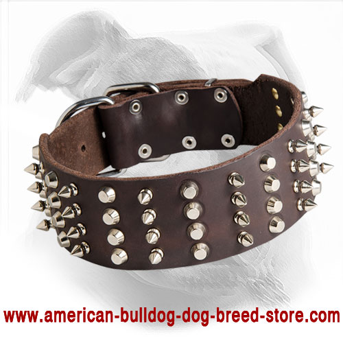 American Bulldog Leather Collar with Spikes and Studs