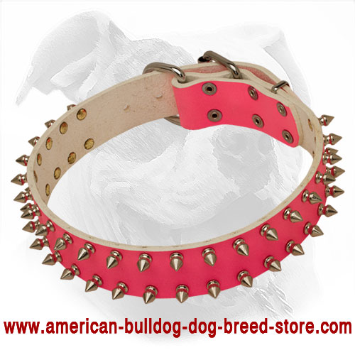 Pink Leather Dog Collar for American Bulldog