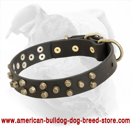 Leather Dog Collar with Pyramids for American Bulldog