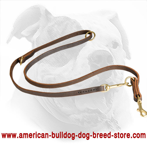 American Bulldog Leather Leash for Training / Walking / Tracking.
