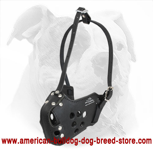 American Bulldog Leather Muzzle for Agitation Training