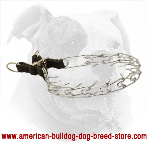 Professional Pinch Dog Collar for American Bulldog