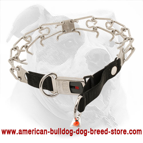 American Bulldog Pinch Collar with Click Lock Buckle and Nylon Loop