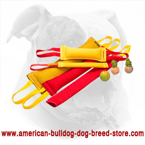 French Linen Dog Set for American Bulldog Training