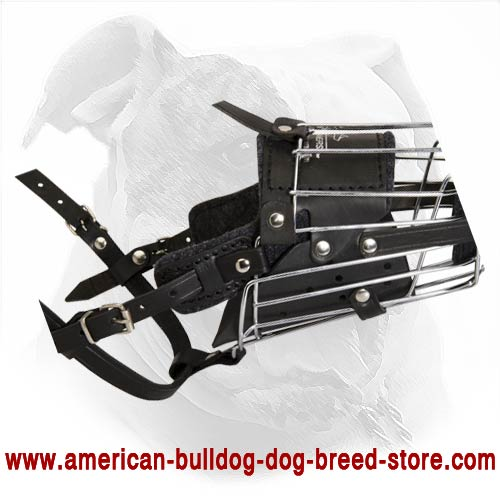 'No Mash' Leather Padded Wire Cage Muzzle for Walking and Training Your American Bulldog