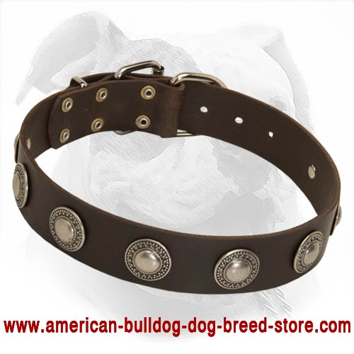 Fashion Leather Dog Collar with Silvery Conchos for Walking American Bulldog - Click Image to Close