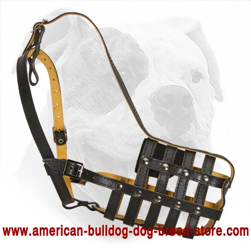 Handcrafted Leather Basket Muzzle with Perfect Air Flow for American Bulldog