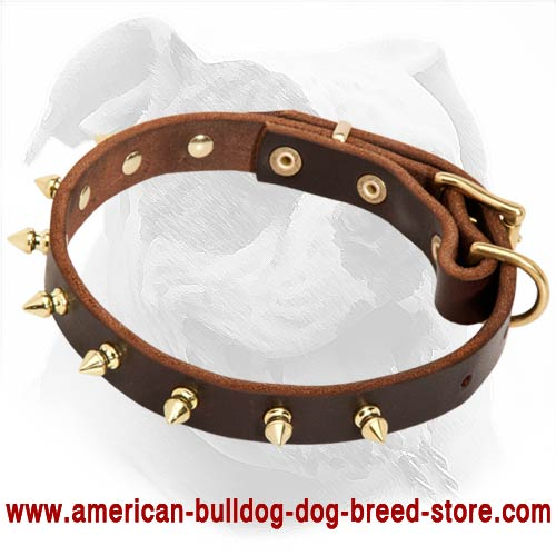 american bulldog collars buy brass spiked leather american bulldog collar for walking 3710