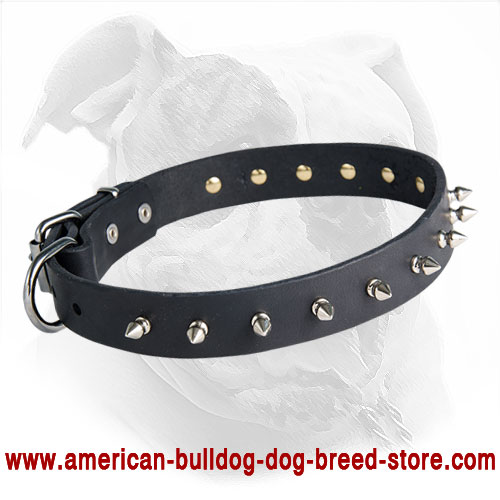 Designer Spiked Leather American Bulldog Collar for Fashionable Walking
