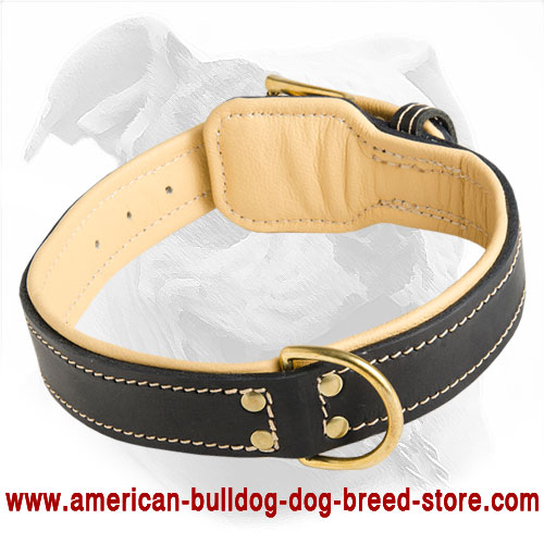 american bulldog collars buy american bulldog collar training padded collars 6764
