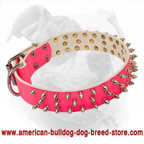 Vastly Spiked Pink Leather American Bulldog Collar for She-Dog Walking