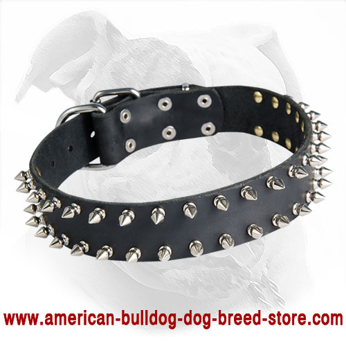 Leather American Bulldog Collar with 2 Rows of Nickel Spikes for Walking in Style
