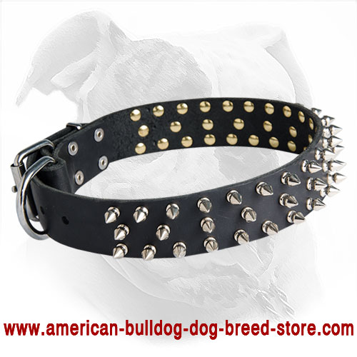 Designer Leather American Bulldog Collar with Spikes for Fashionable Walking