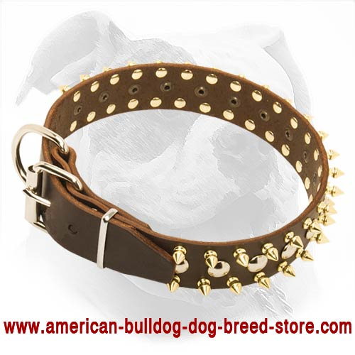 Spiked & Studded Leather American Bulldog Collar for Dailly Walking