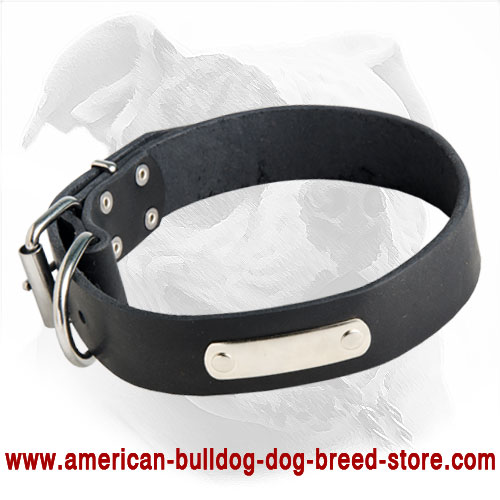 Identification Leather American Bulldog Collar for Walking and Training