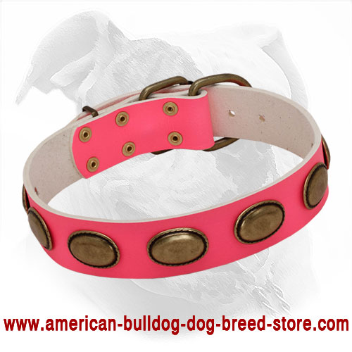 Stylish Pink Leather Collar for American Bulldog She-Dogs