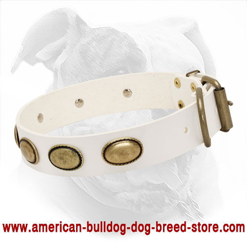 White Leather Dog Collar with Vintage Brass Ovals for American Bulldog Walking
