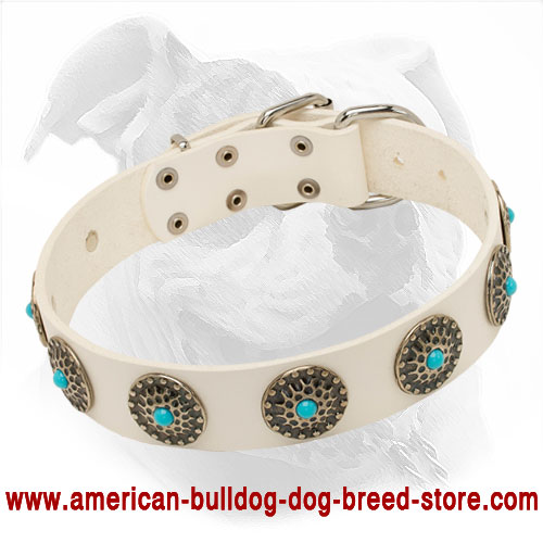 Blue Stoned White Leather Dog Collar for Fashionable American Bulldog Walking