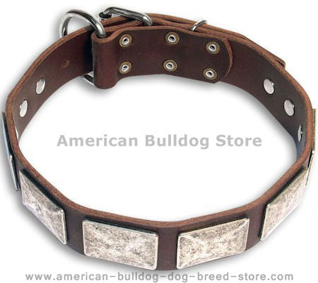 Exquisite American Bulldog Collar Decorated with Silver Color Plates