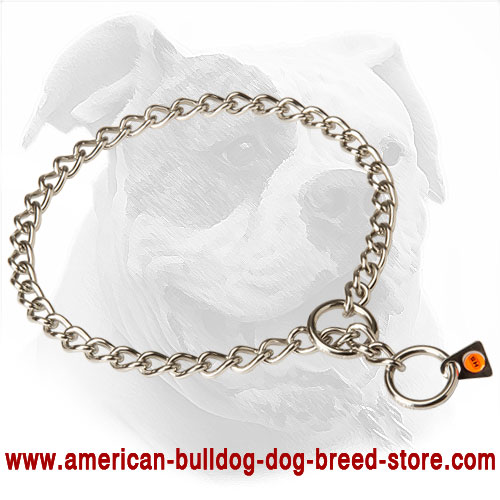 Herm Sprenger Choke Dog Collar for American Bulldog