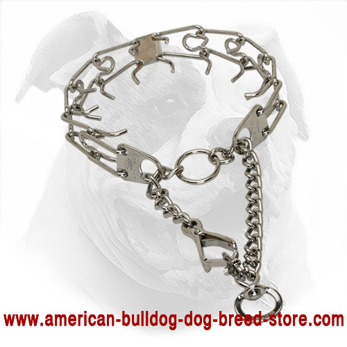 Herm Sprenger Dog Collar with Snap Hook for American Bulldog