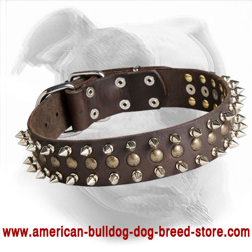 """Perfect Look"" with this Leather American Bulldog Collar"