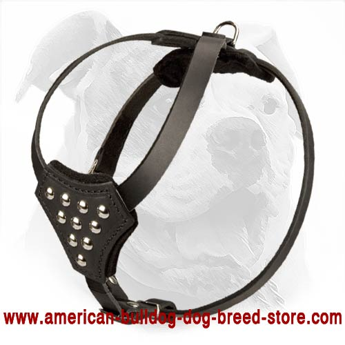 Leather American Bulldog Harness Decorated with Studs for Puppy