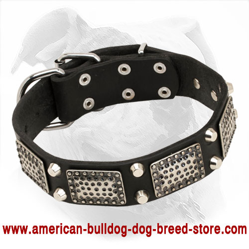Leather American Bulldog Collar Decorated with Large Plates