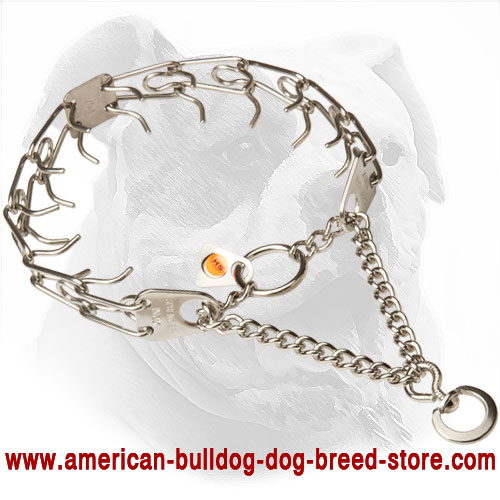 American Bulldog Pinch Collar Made of Stainless Steel