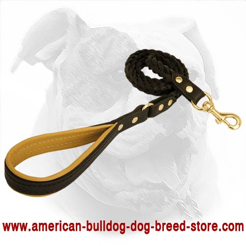 Practical and reliable canine leash for training American Bulldog