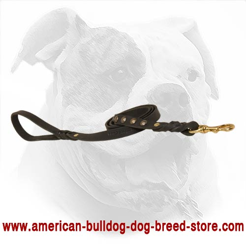 Easy training and walking for American Bulldog with this lead