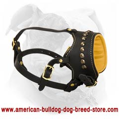 Anti-biting American Bulldog muzzle