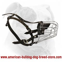 Easy training with American Bulldog wire basket muzzle