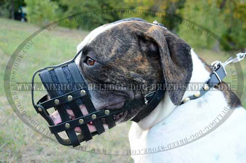 High quality leather muzzle for your Bully