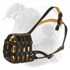 American Bulldog leather basket muzzle