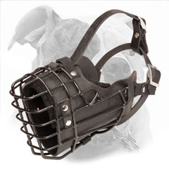Wire Cage Muzzle for American Bulldog Agitation Training