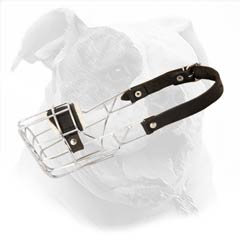 Super air circulated American Bulldog Muzzle