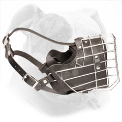 American Bulldog Wire Basket and Leather Muzzle
